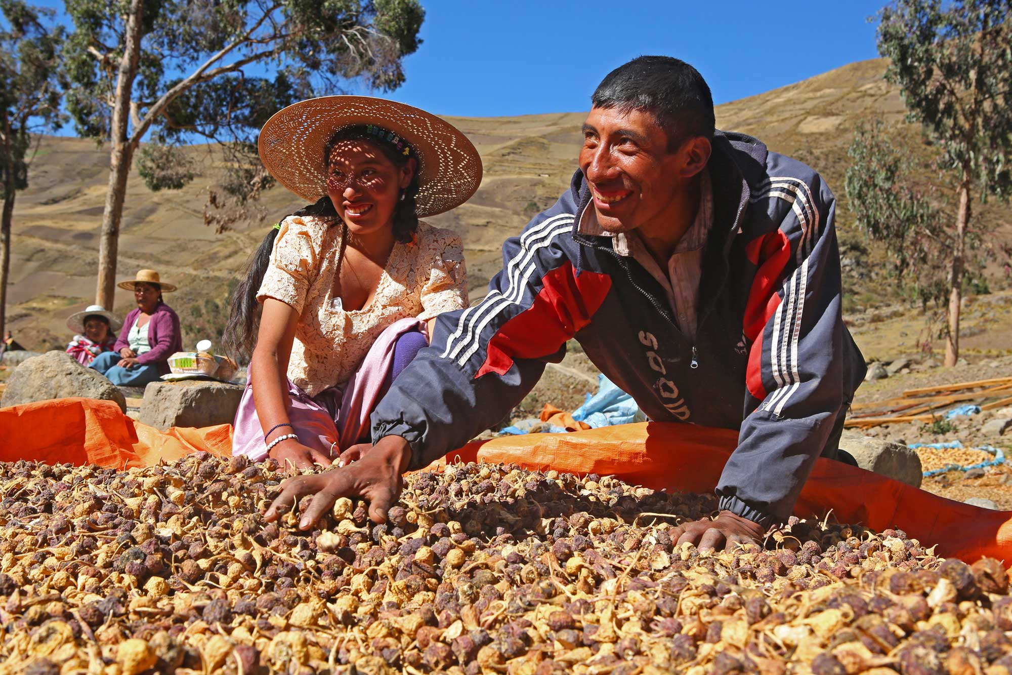 Sofia and German Pere smile as they spread out a pile of maca in the sun.