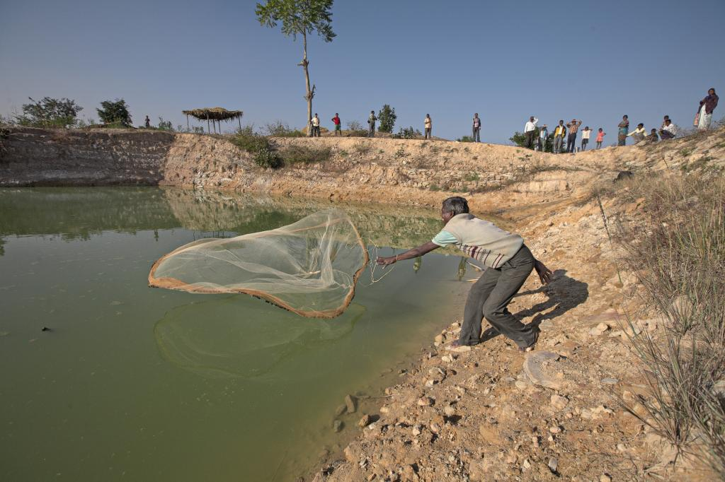 """<span class=""""photo-caption"""">Marwar Orao throws a fishing net into one of five ponds built through an MCC-supported food-for-work project in India's Jharkhand state. Ponds are vital for irrigation and can be used to raise fish, one more way that this MCC-supported effort of Mennonite Christian Service Fellowship of India, a service organization of Indian Mennonite and Brethren in Christ churches, is helping to improve the lives of farmers.</span><span class=""""photo-credit"""">Melissa Hess</span>"""