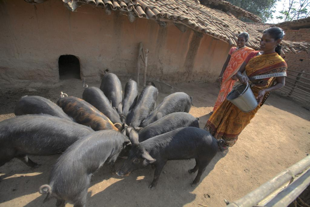 """<span class=""""photo-caption"""">Through MCC's partnership with SVWST, a women's group in the village of Rurungkocha learned of a local government program that helped them begin to raise pigs, bringing new opportunity to group members such as Magdali Toppo, right, and Jacinta Tika.</span><span class=""""photo-credit"""">Melissa Hess</span>"""