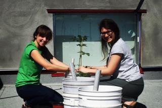 Allison Goerzen and Krystal Esau plant