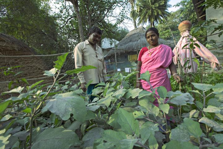 Through an MCC project with ABSK, more than 50 families have established kitchen gardens, growing nutritious vegetables such as cabbage, eggplant and pumpkin. Bhim Hansda, a field worker for ABSK, and his wife Monica Hansda, a member of a local women's group, stand in their kitchen garden in the village of Domdama. This project, which is supported through MCC's account at the Canadian Foodgrains Bank, also trains farmers in worm compost­ing and seed preservation.