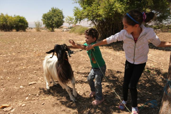 "<span>Dyala Naoush and her son, Khaled and daughter Yavana received a pregnant goat from MCC partner </span><span class=""highlight"">LOST</span><span> as part of a small MCC supported goat distribution project offering families a goat and training on how to care and raise more goats. </span><br /><span>MCC partner </span><span class=""highlight"">Lebanon</span><span> Organization for Studies and Training (</span><span class=""highlight"">LOST</span><span>) works in the Baalbeck valley in peacebuilding and empowering women.</span>"