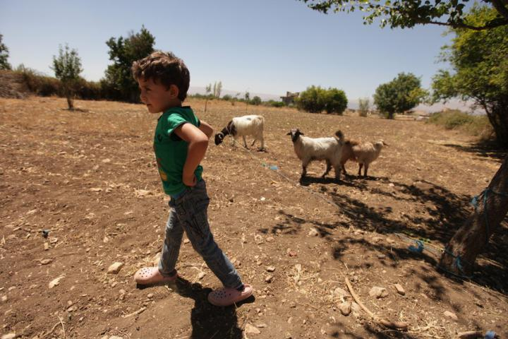 """<span>DyalaNaoushand her son,Khaledand daughterYavanareceived a pregnant goat fromMCCpartner</span><span class=""""highlight"""">LOST</span><span>as part of a smallMCCsupported goat distribution project offering families a goat and training on how to care and raise more goats.</span><br /><span>MCCpartner</span><span class=""""highlight"""">Lebanon</span><span>Organization for Studies and Training (</span><span class=""""highlight"""">LOST</span><span>) works in theBaalbeckvalley inpeacebuildingand empowering women.</span>"""