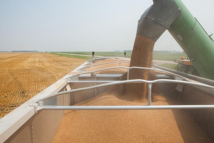 Crystal Spring's wheat harvest.