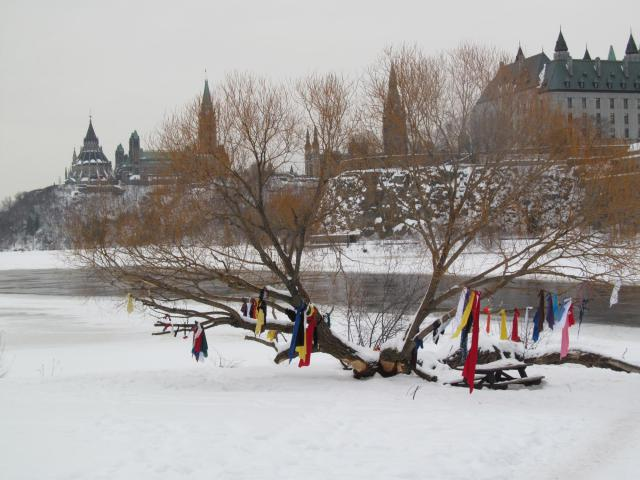 The Supreme Court of Canada through the branches of the Ribbon Tree on Victoria Island
