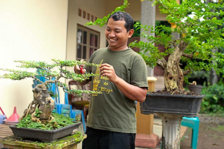 Yunarso Rusandono trims a bonsai tree in his front garden